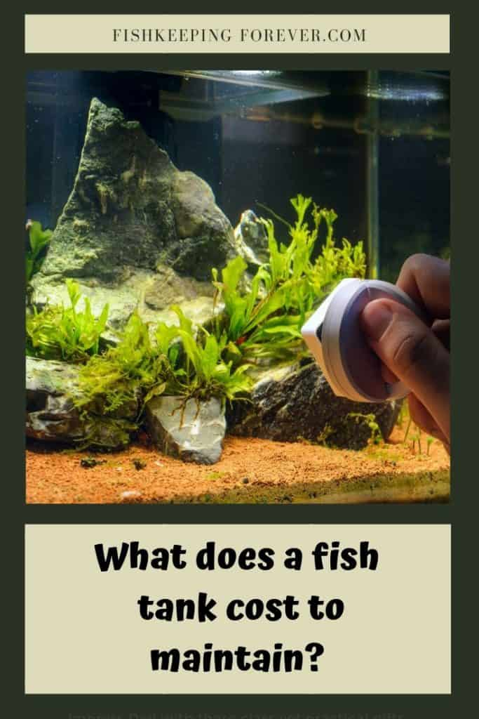 What Does A Fish Tank Cost To Maintain? Complete Cost Breakdown 1