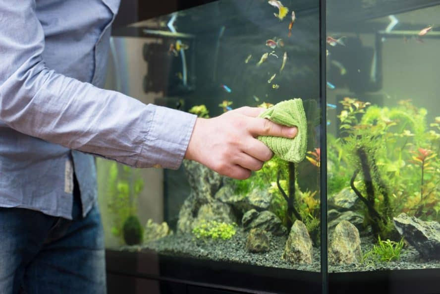 article on the cost of maintaining a fish tank.
