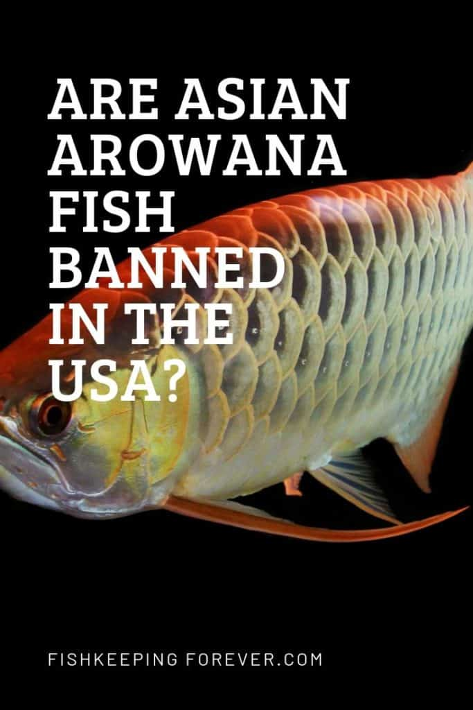 Are Arowanas Banned In The United States? US Fish Laws On Arowanas. 1