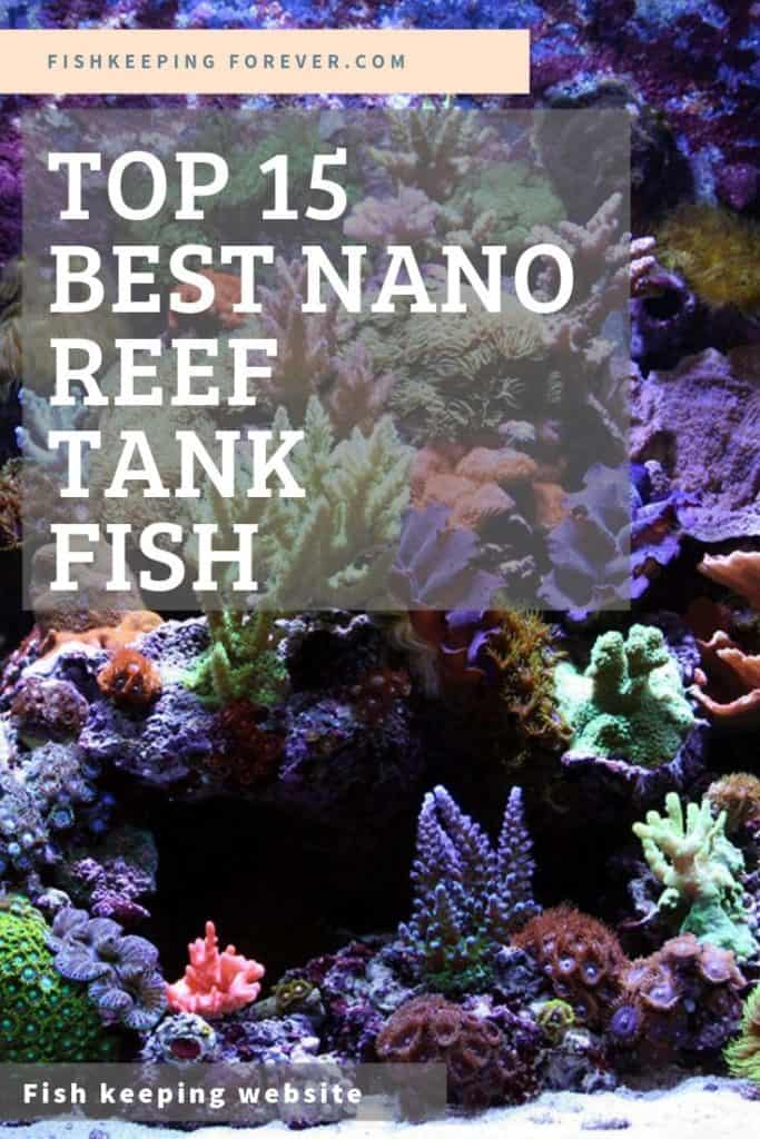 TOP 15 NANO REEF TANK FISH PICTURE