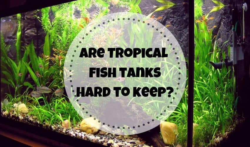 are fish tanks hard to keep