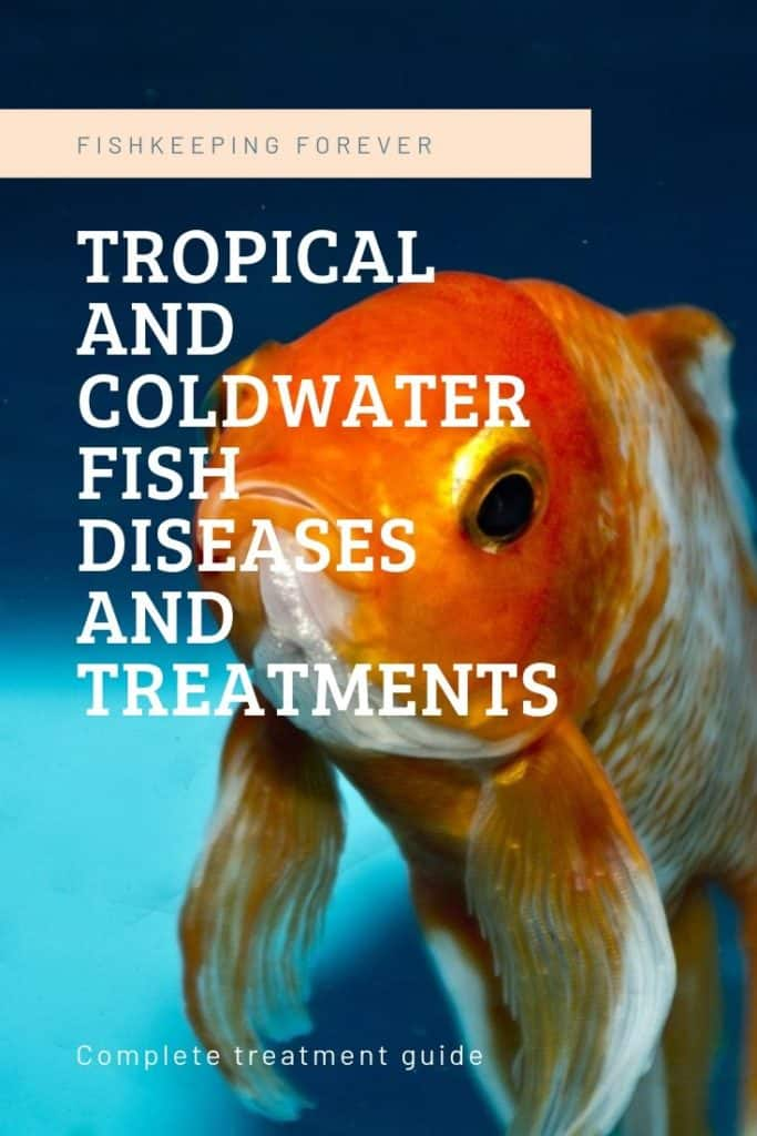 Tropical Fish Diseases - Symptoms & Treatments 1