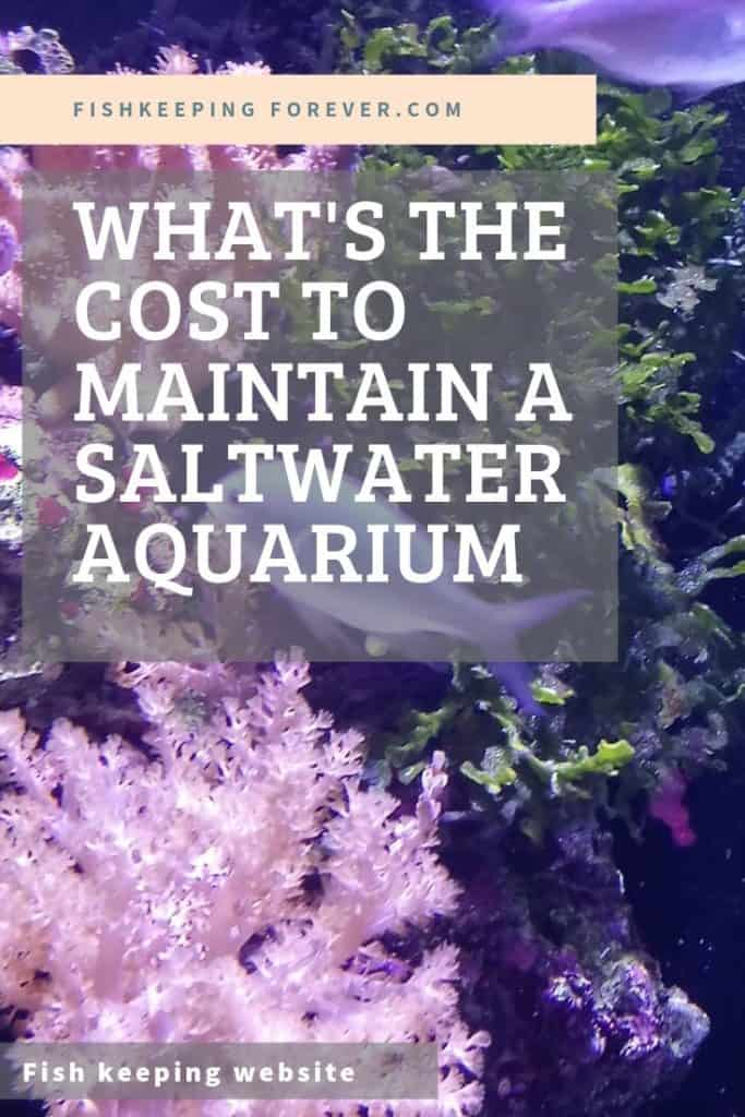 What Does a SaltWater Aquarium Cost to Maintain? 1