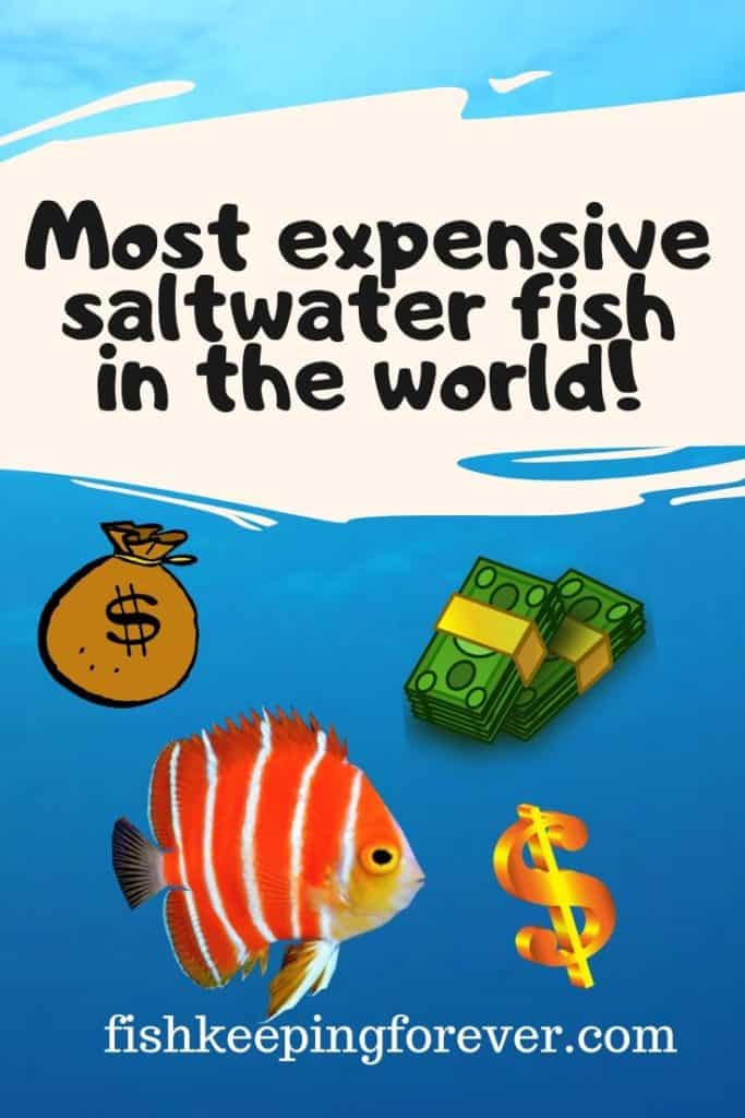 most expensive saltwater fish image