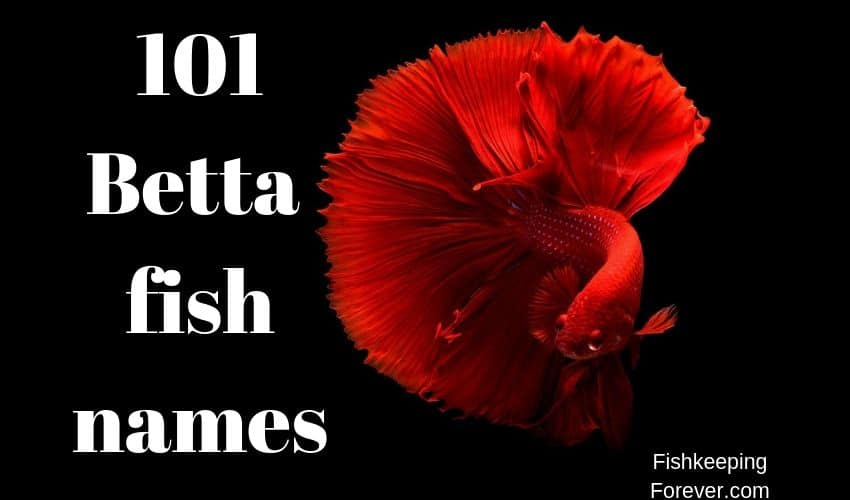 betta fish names