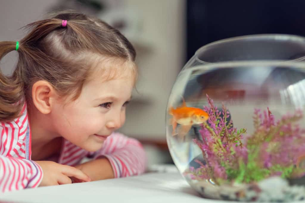 girl looking at a goldfish