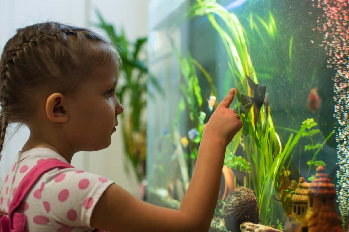 girl looking at tropical fish