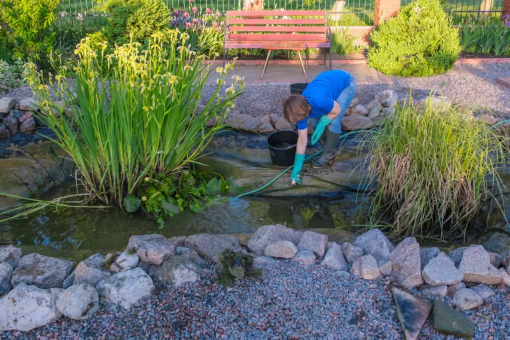 cleaning a fish pond