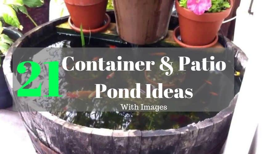 21 container and patio pond ideas