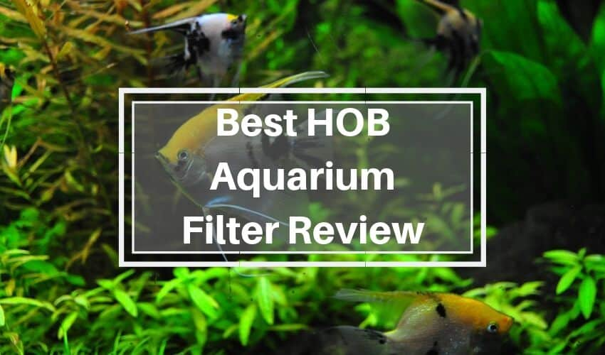 hob filter review