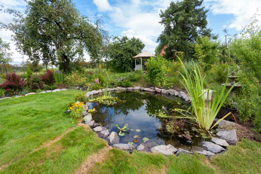 7 Ways To Keep Your Pond Clear