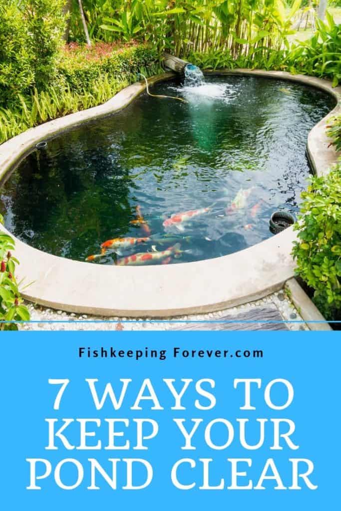 keeping your pond clear