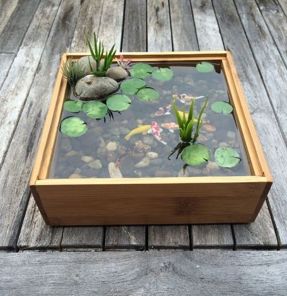 mini koi pond