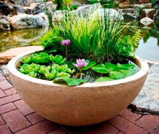 container pond plants