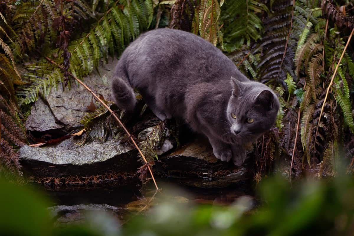 cat near a pond