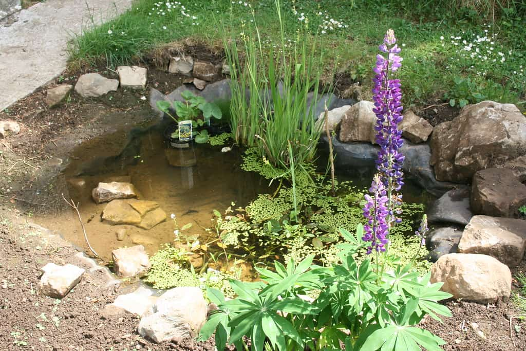 wildlife pond