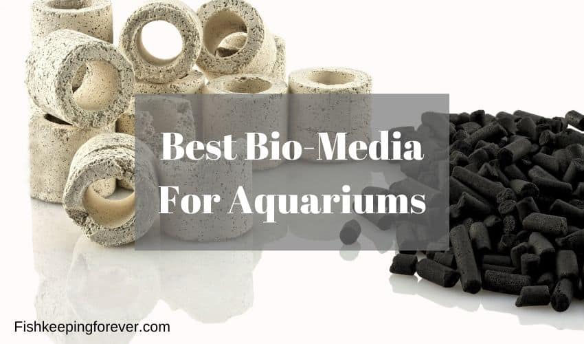 Best Bio-Media Aquarium Filters 2020 ( Updated Review ) 1