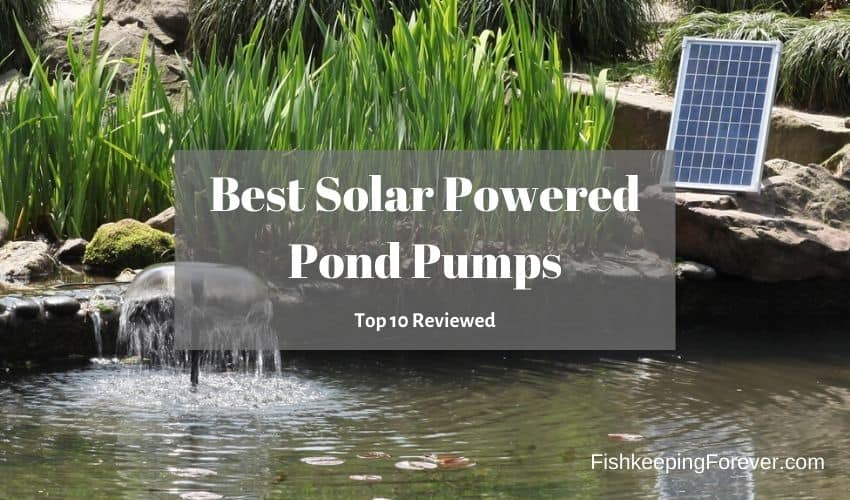 best solar powered pond pump
