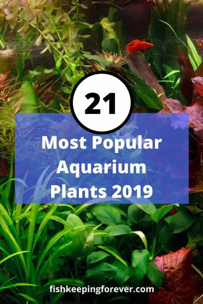 aquarium plants: 21 most popular