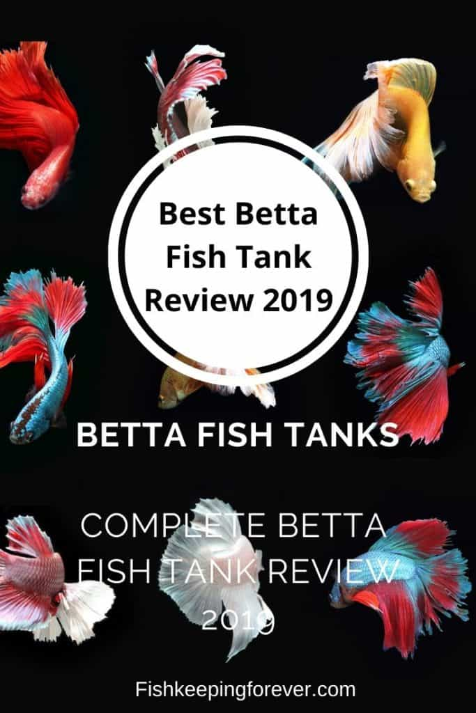 BEST BETTA FISH TANK REVIEW