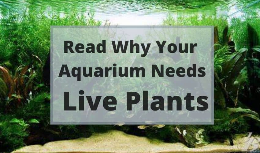 why aquariums need live plants
