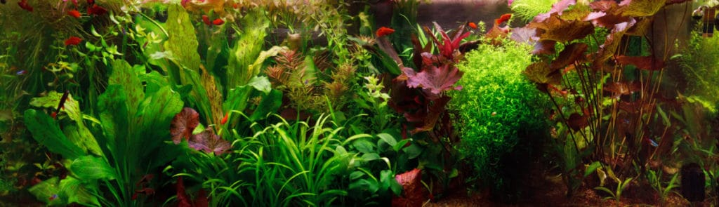 Does Your Aquarium Need Live Plant?