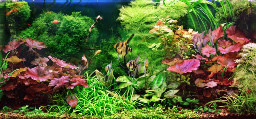 Does Your Aquarium Need Live Plant? | With Pictures 1