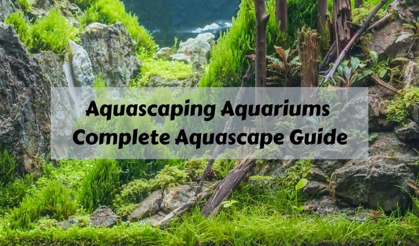 aquascaping complete guide