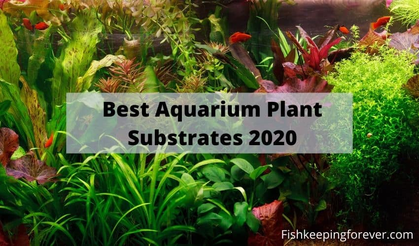 aquarium plant substrate review