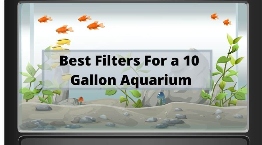 Best Filters For A 10 Gallon Aquarium | Pros & Cons 2020 1