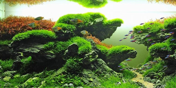 Taiwanese style aquascapes