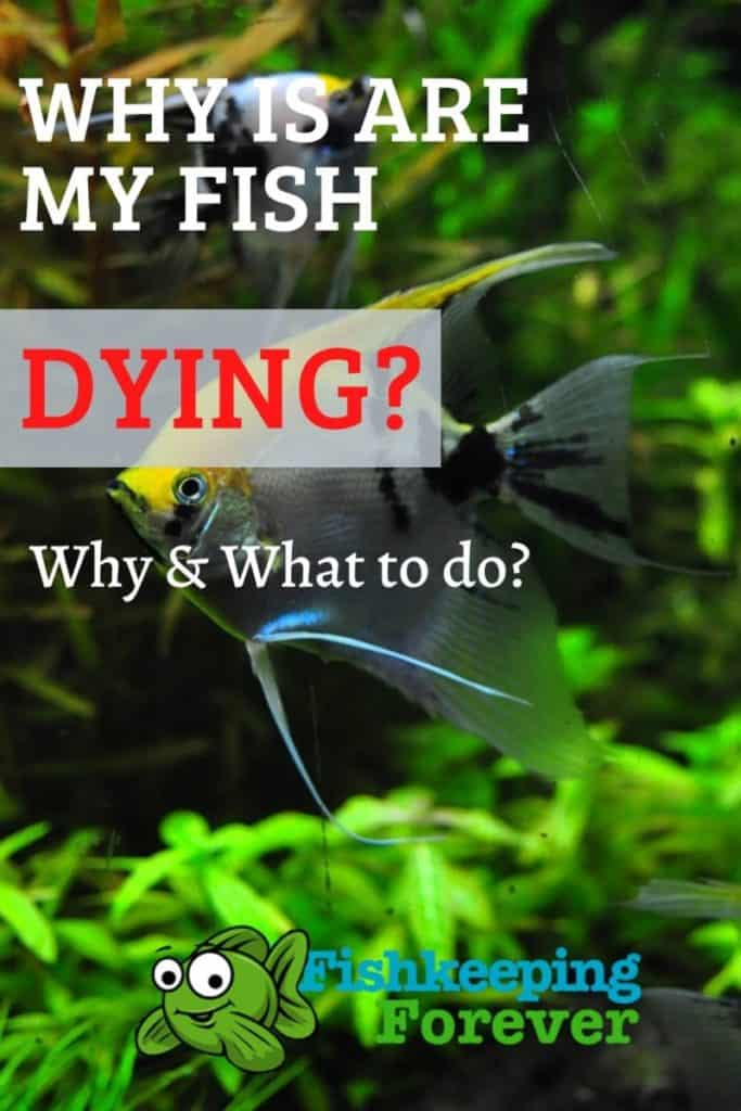 Why Are My Fish Dying? Simple steps to avoid this! 1