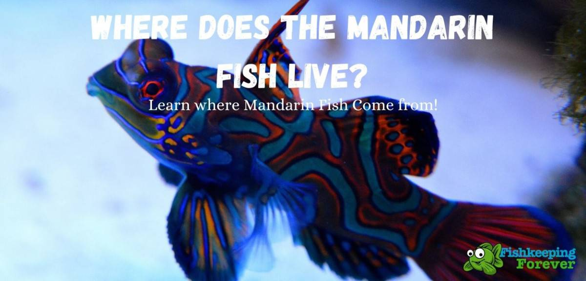 Where Does the Mandarin Fish Live?