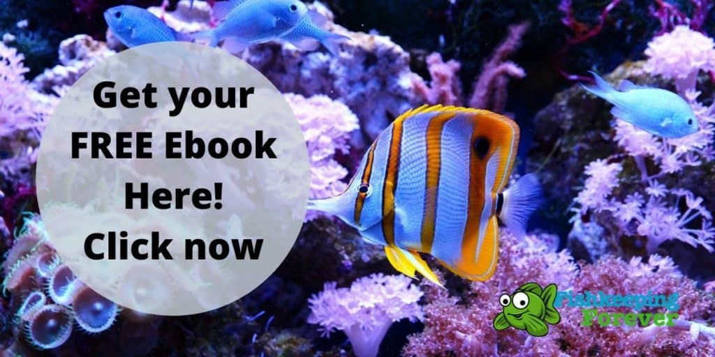 FREE Fishkeeping Ebook 1