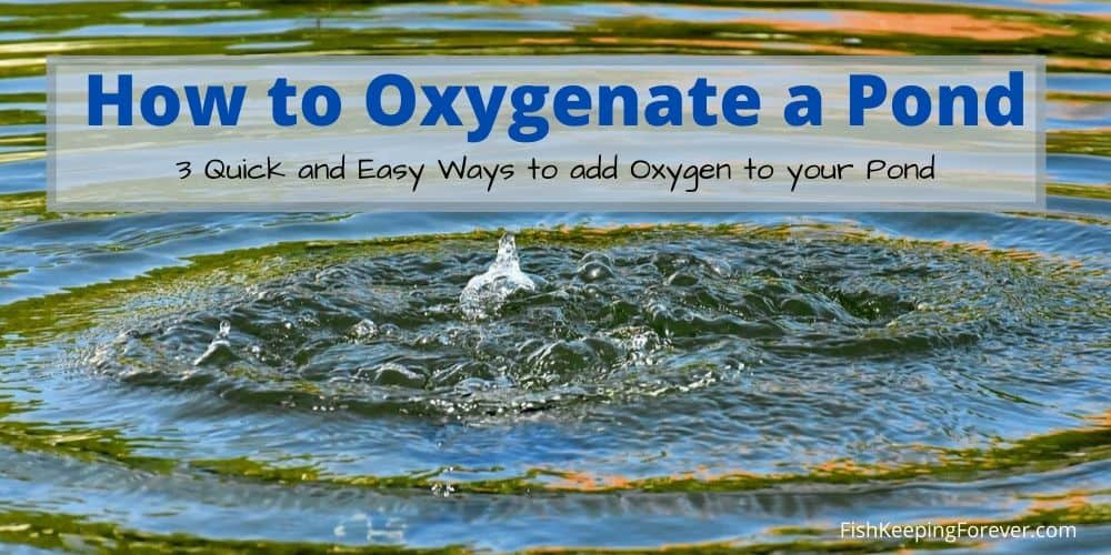 How to Oxygenate a Pond