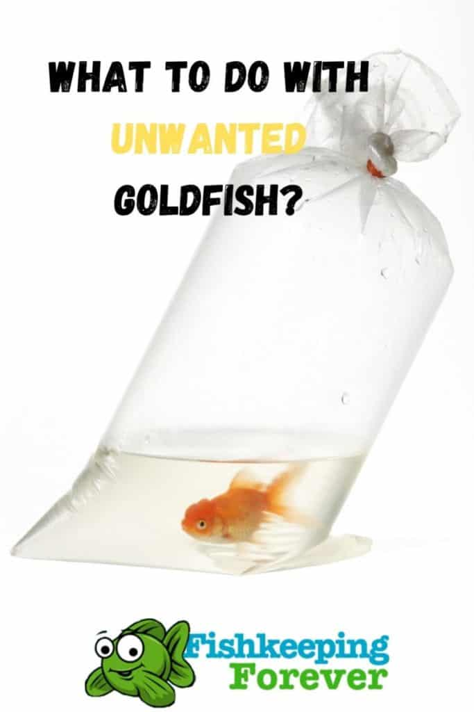 What to do with unwanted Goldfish?