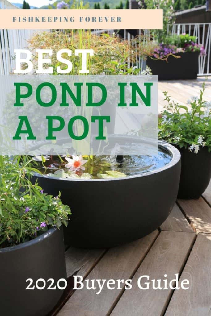 Pond in a Pot | 10 Best Pond Bowls to Create a Pond in a Pot 1