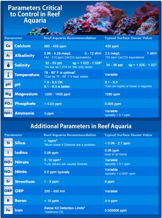 Corals for Beginners | Common Corals For Reef Aquariums 1
