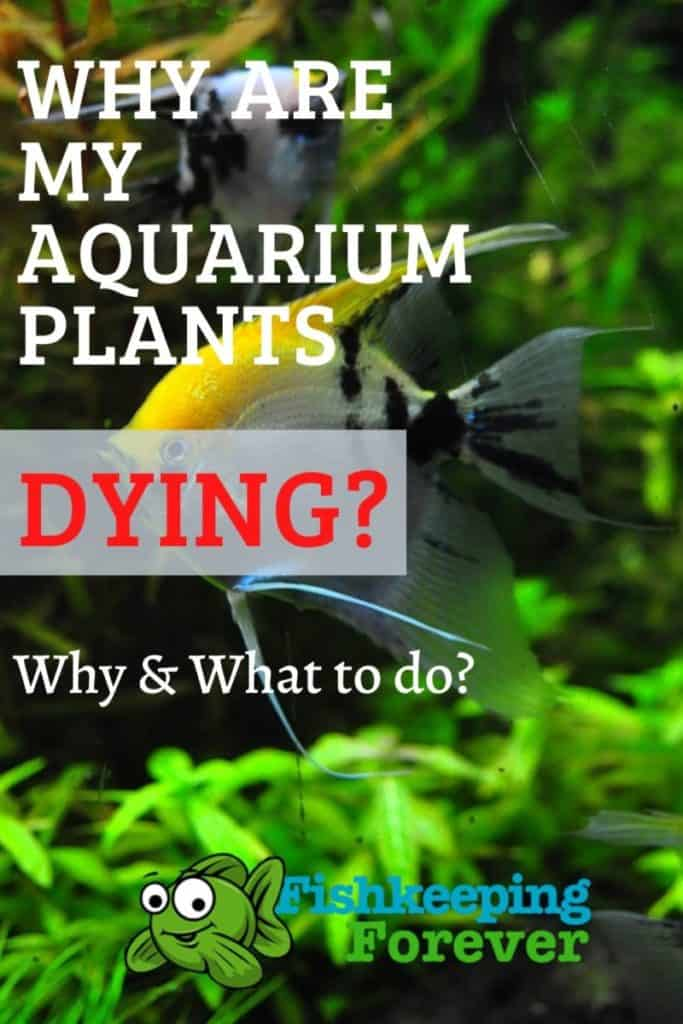 why are my aquarium plants dying?