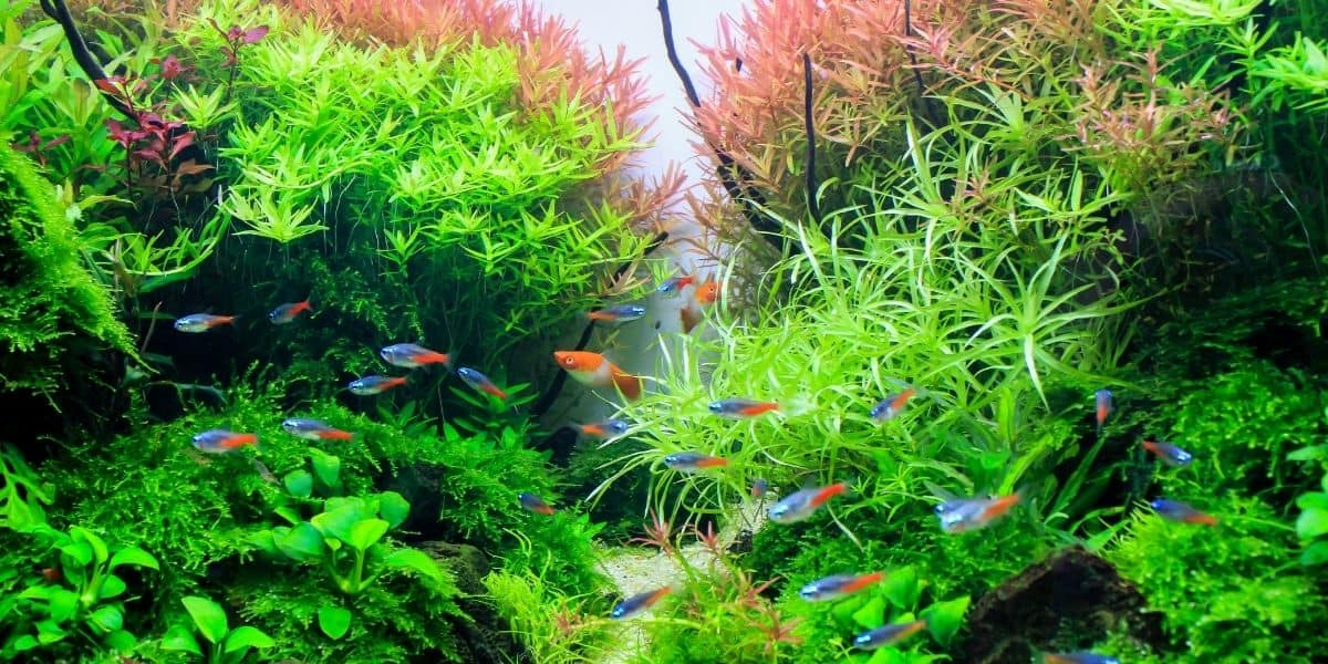 plants with baby fish