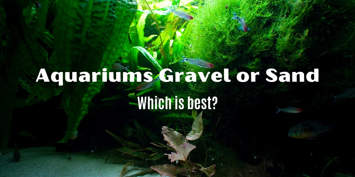 Comparing Aquarium Gravel To Sand