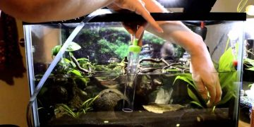 cleaning a fish tank makes fish happy