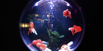 filters for fish bowls