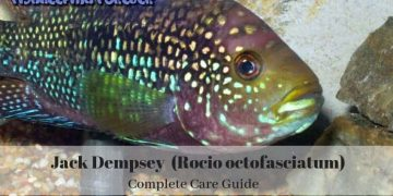 JACK DEMPSEY ULTIMATE CARE GUIDE